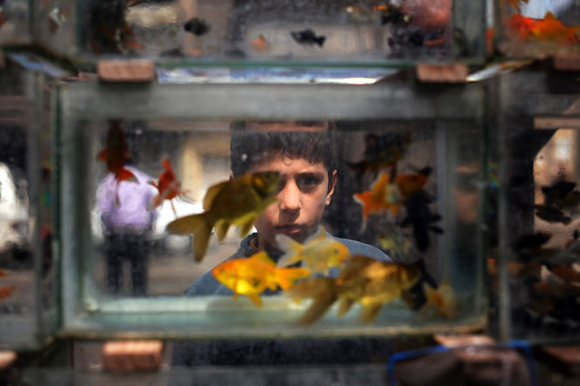 A Syrian boy looks at fish swimming in a tank at a market the northern Syrian city of Aleppo on April 5, 2013. The UN is hiking its estimates of people trapped in Syria after fleeing their homes, saying some four million are now displaced inside the country and in dire need of international help. AFP PHOTO / DIMITAR DILKOFF